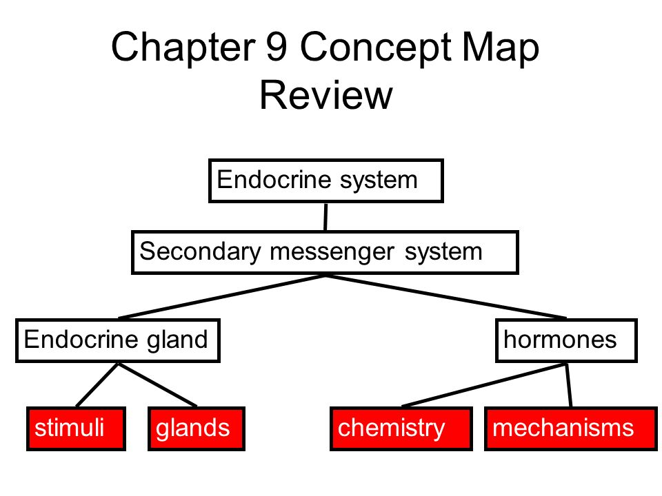 Hormone Concept Map.Bell Work 3 10 Write Today S Assignments In Your Planner Ppt Download