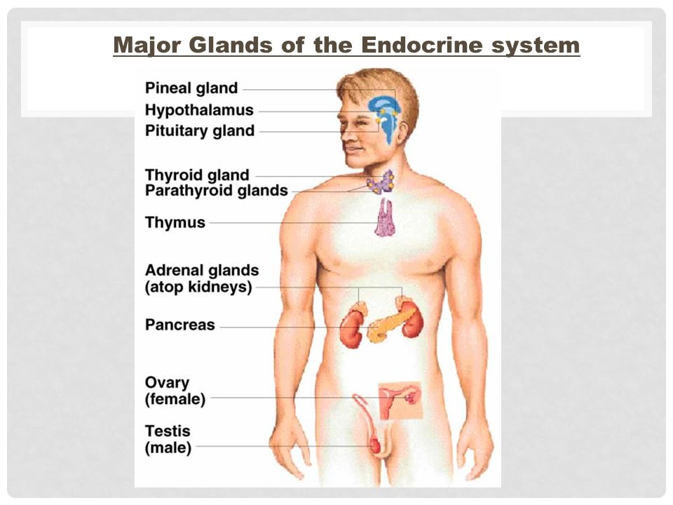 The Endocrine system Glands and hormones. - ppt video online download