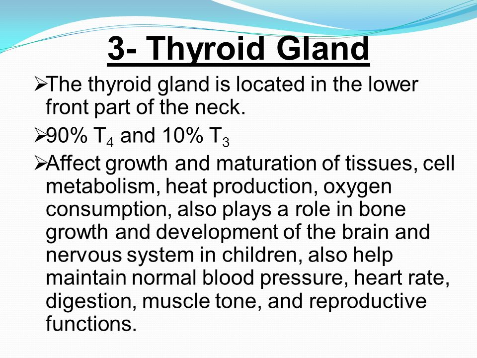3- Thyroid Gland The thyroid gland is located in the lower front part of the neck. 90% T4 and 10% T3.