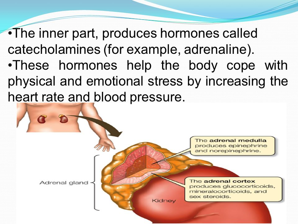 The inner part, produces hormones called