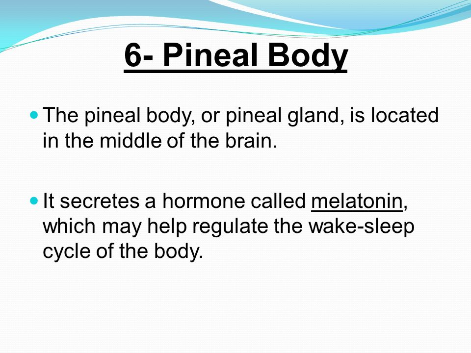 6- Pineal Body The pineal body, or pineal gland, is located in the middle of the brain.