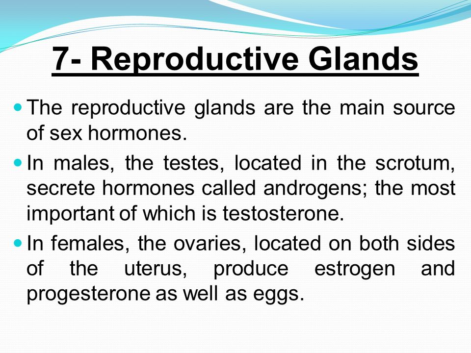 7- Reproductive Glands The reproductive glands are the main source of sex hormones.