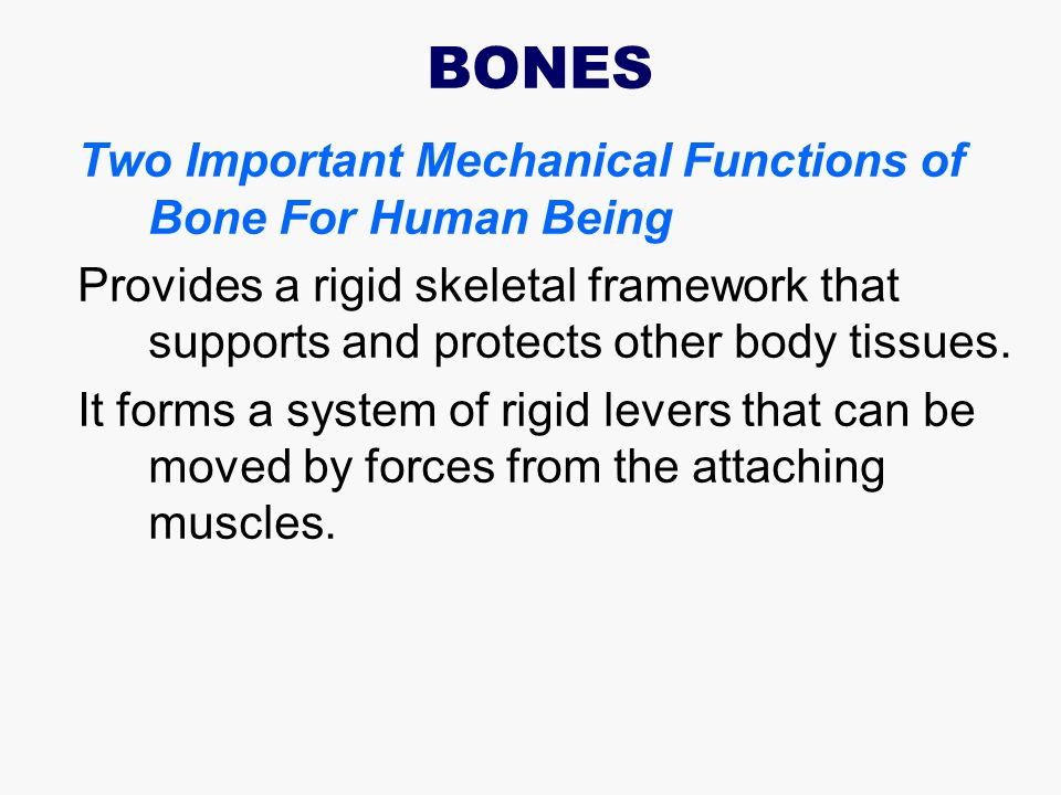 2 BONES Two Important Mechanical Functions ...