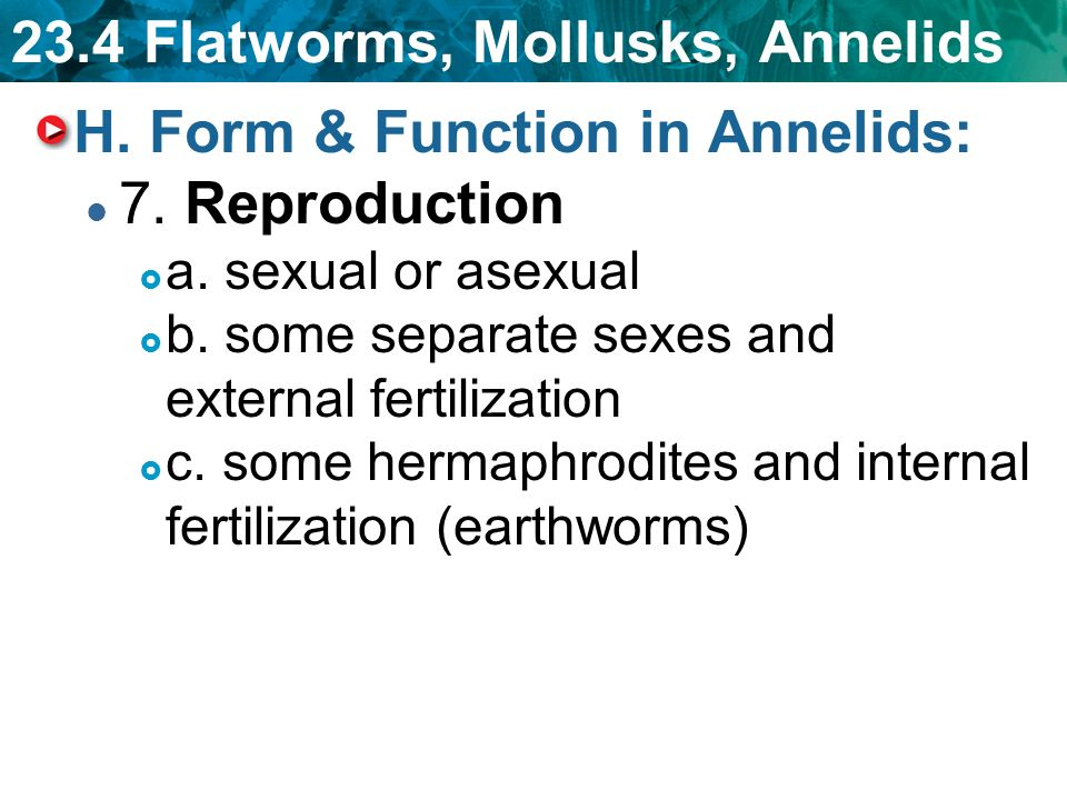 Mollusks asexual reproduction