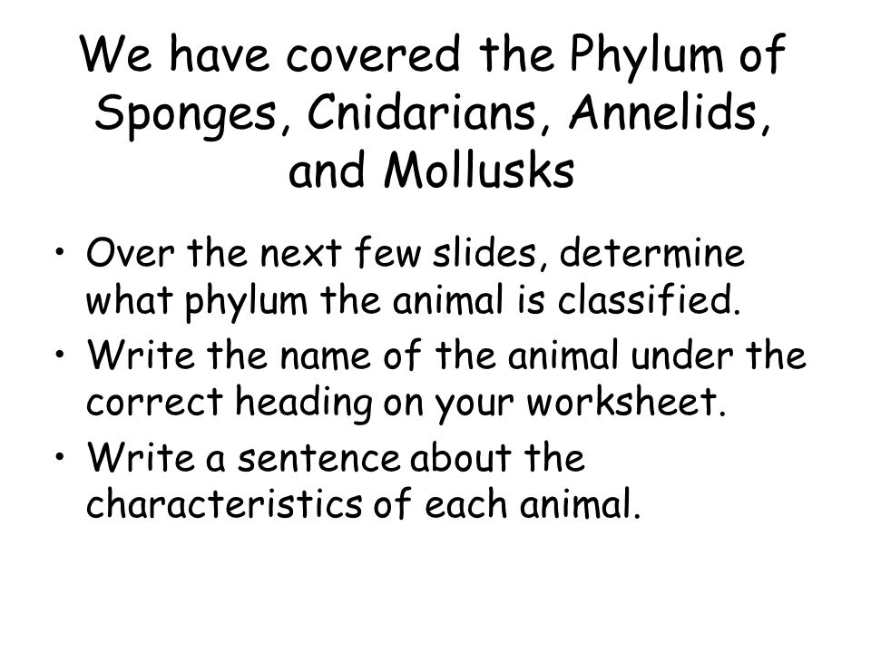 Chapter 29 Mollusks And Annelids Ppt Video Online Download. We Have Covered The Phylum Of Sponges Cnidarians Annelids And Mollusks. Worksheet. Mollusks Worksheet Answer Key At Mspartners.co