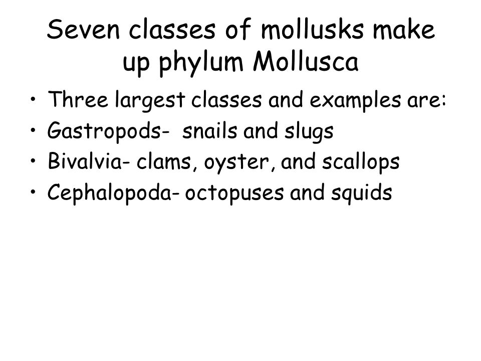 Chapter 29 Mollusks And Annelids Ppt Video Online Download. Seven Classes Of Mollusks Make Up Phylum Mollusca. Worksheet. Mollusks Worksheet Answer Key At Clickcart.co
