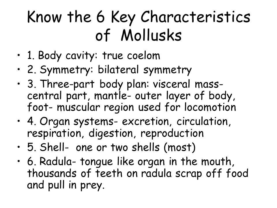 Chapter 29 Mollusks And Annelids Ppt Video Online Download. Know The 6 Key Characteristics Of Mollusks. Worksheet. Mollusks Worksheet Answer Key At Mspartners.co