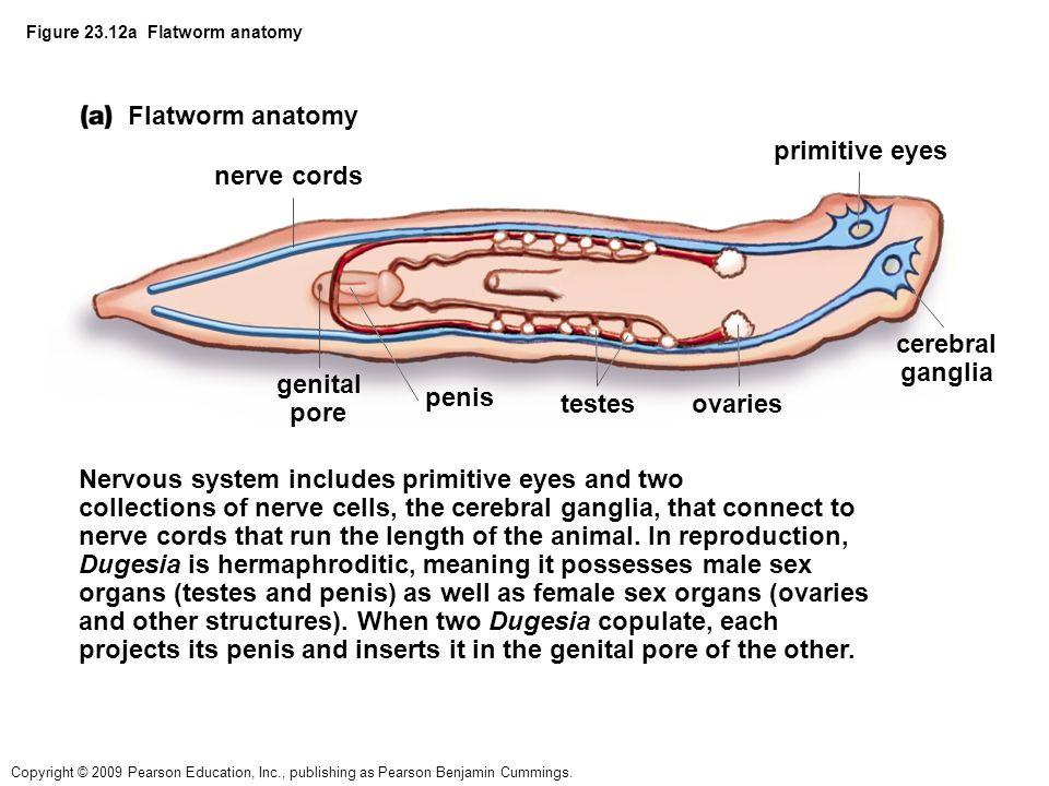 Kingdom Animalia Eukaryotic No Cell Wall Multicellular Heterotrophic