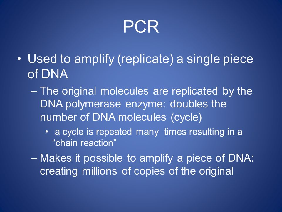 PCR Used to amplify (replicate) a single piece of DNA