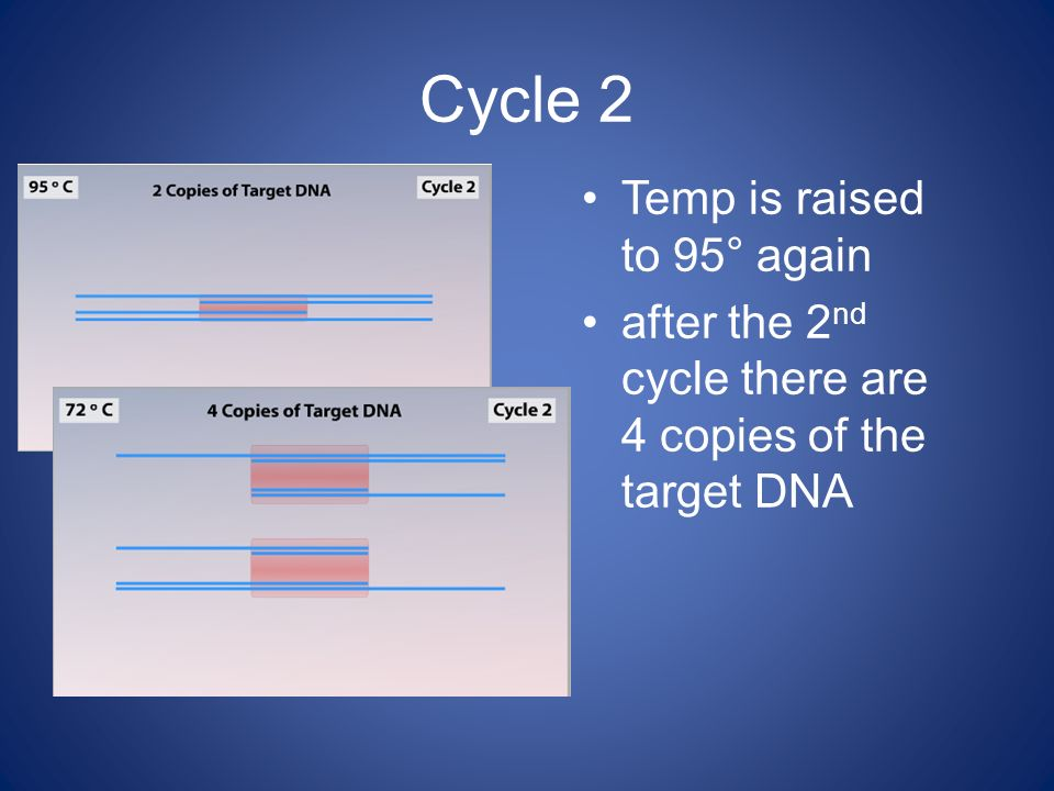 Cycle 2 Temp is raised to 95° again