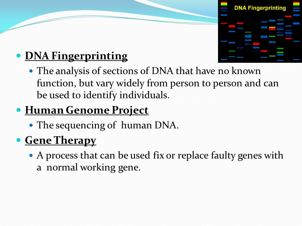 DNA Fingerprinting Human Genome Project Gene Therapy