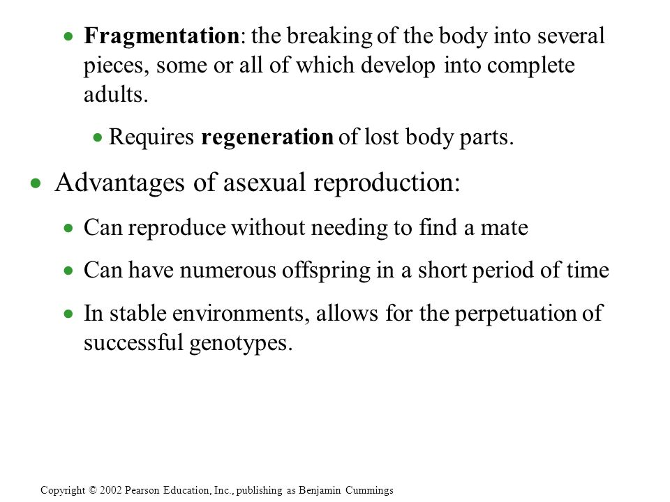 Asexual reproduction occurs during muscle