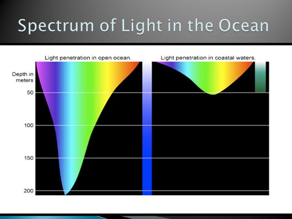 Light penetration open ocean — img 8