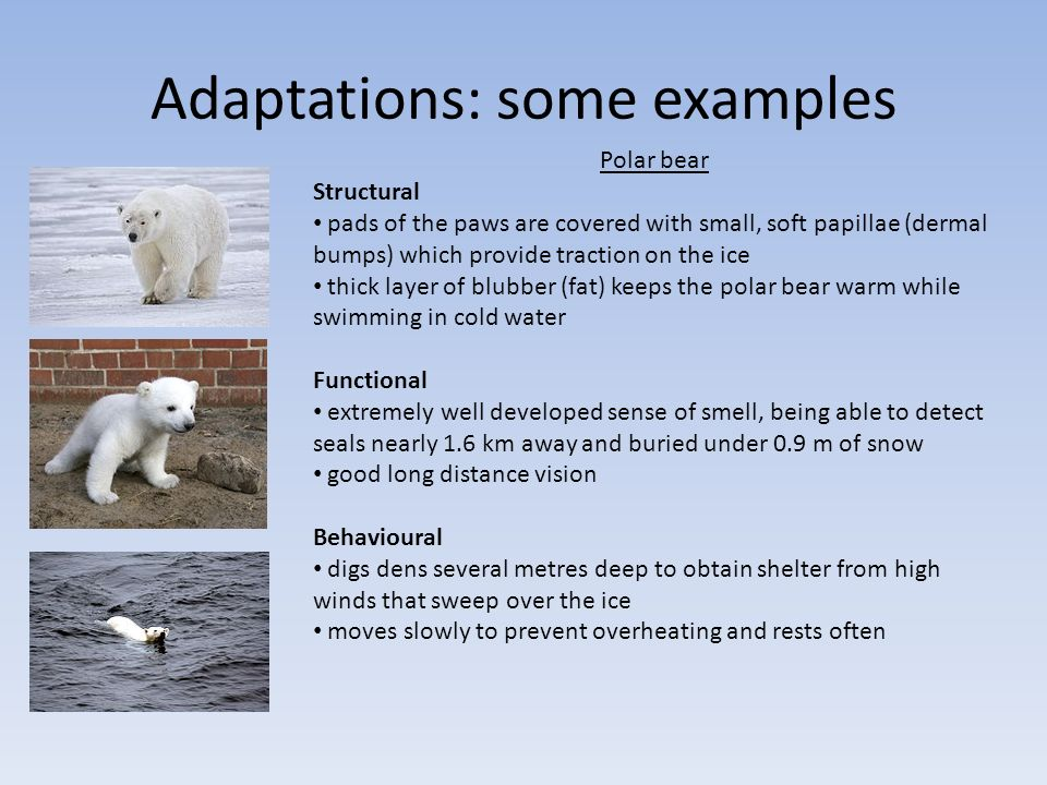Structural Adaptation Examples Image Collections Example Cover