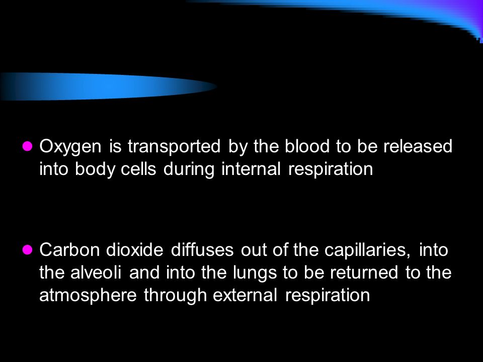 Oxygen is transported by the blood to be released into body cells during internal respiration