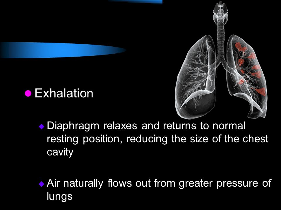 Exhalation Diaphragm relaxes and returns to normal resting position, reducing the size of the chest cavity.