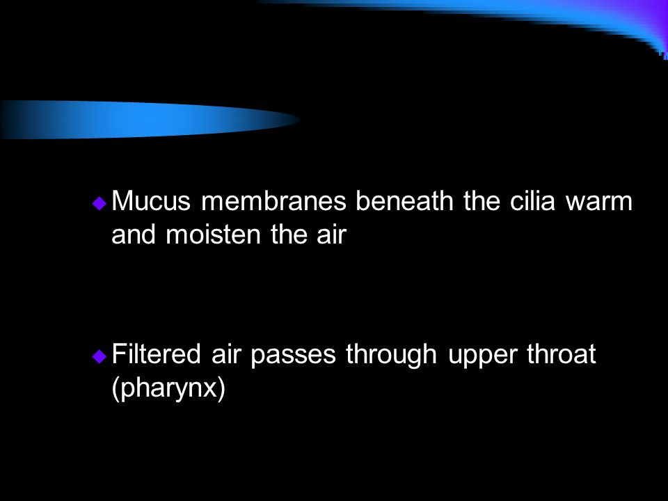 Mucus membranes beneath the cilia warm and moisten the air