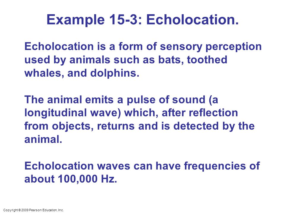 Example 15-3: Echolocation.