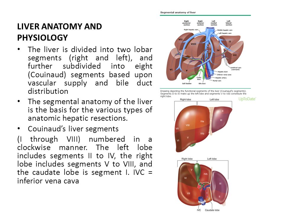 Functional Liver Anatomy Diagram Block And Schematic Diagrams