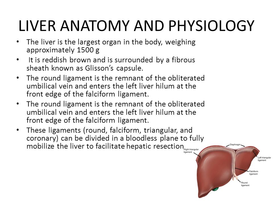 LIVER ANATOMY AND PHYSIOLOGY - ppt download