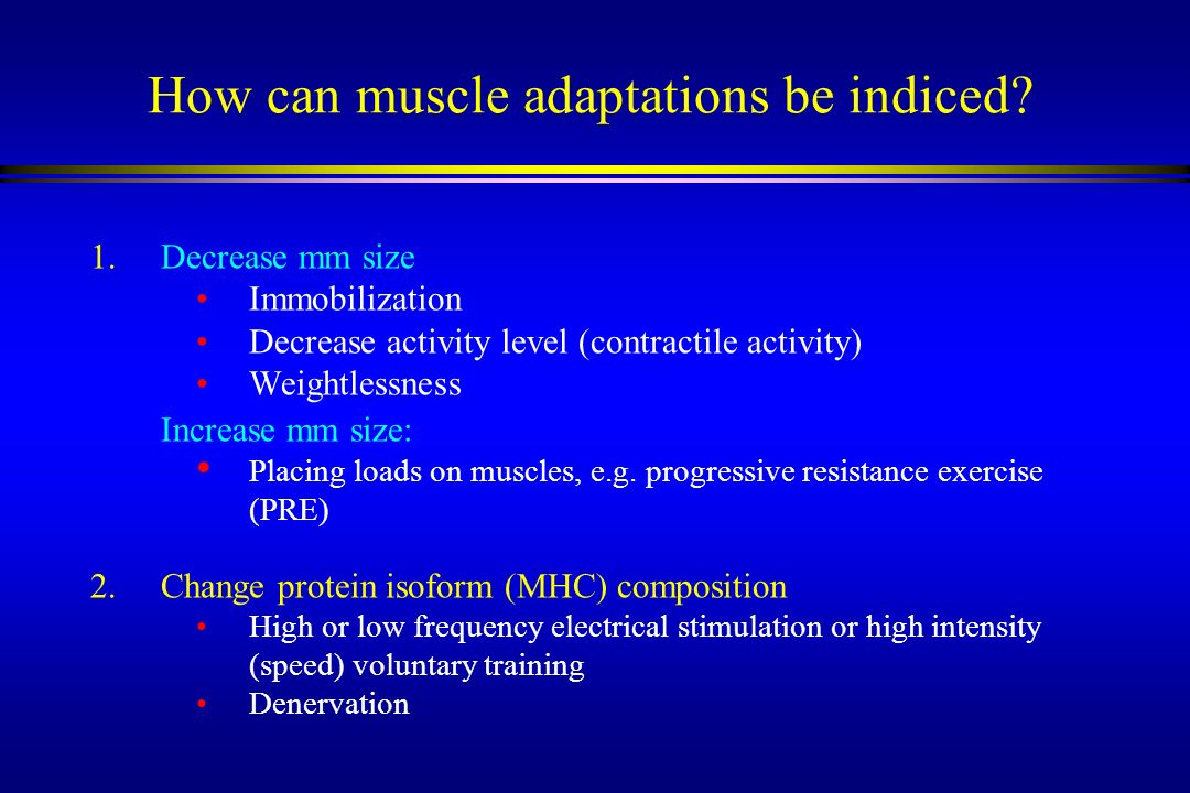 How can muscle adaptations be indiced