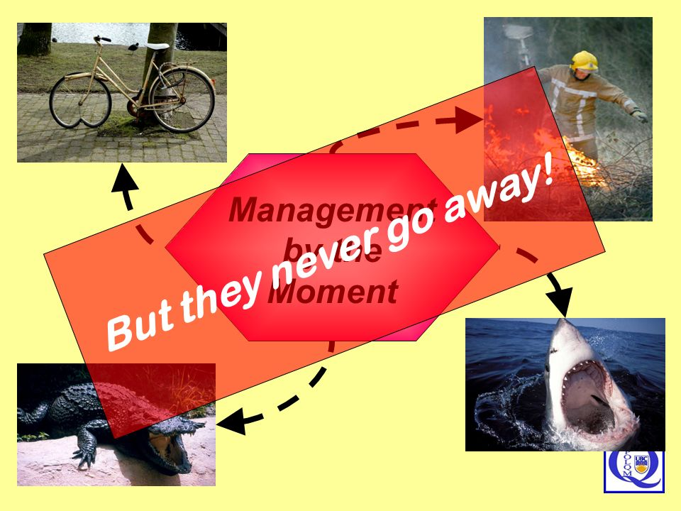 Management by the Moment
