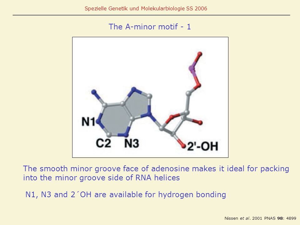 The smooth minor groove face of adenosine makes it ideal for packing