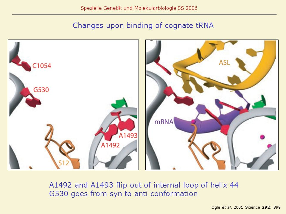 Changes upon binding of cognate tRNA