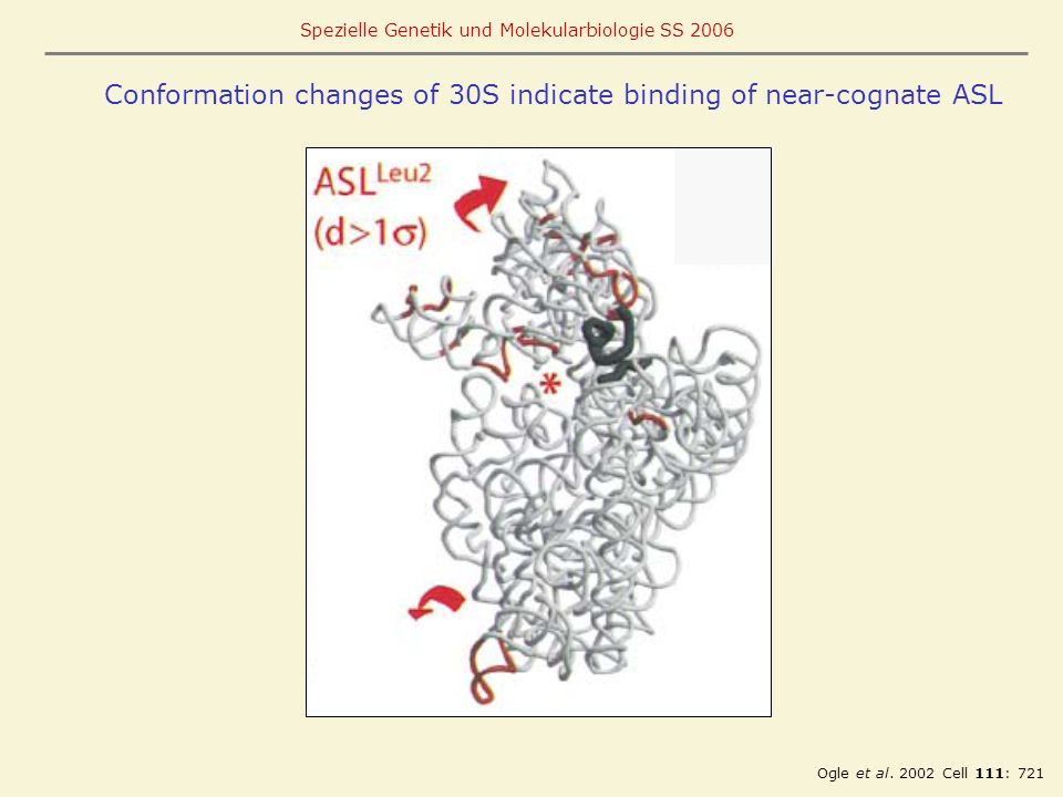 Conformation changes of 30S indicate binding of near-cognate ASL