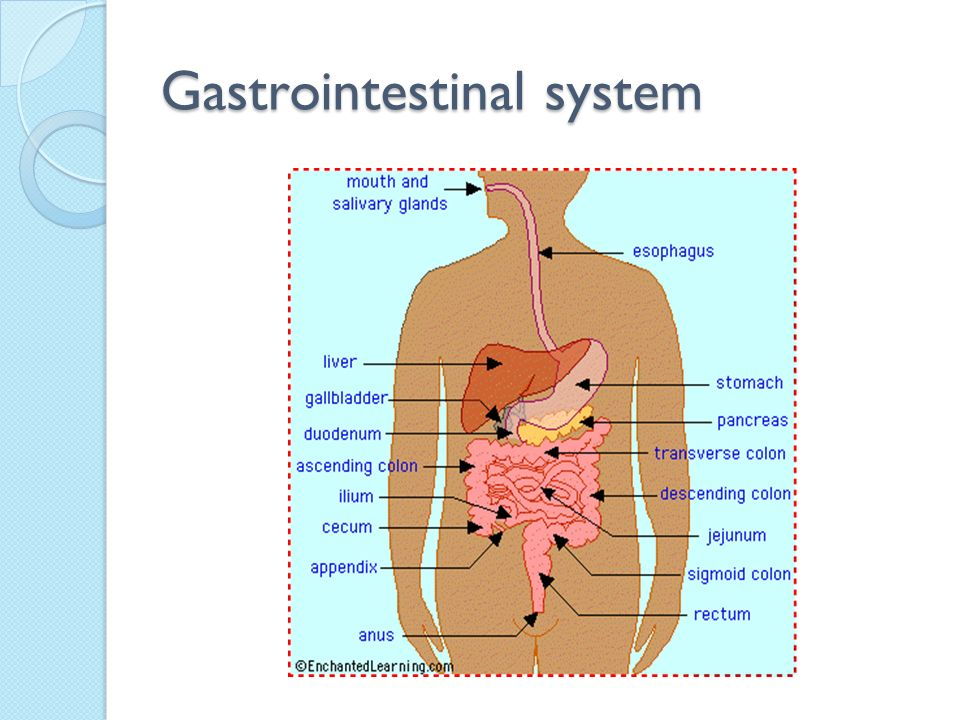 Gastrointestinal System - ppt video online download