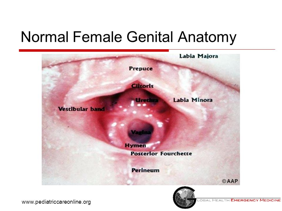 Genital anatomy female
