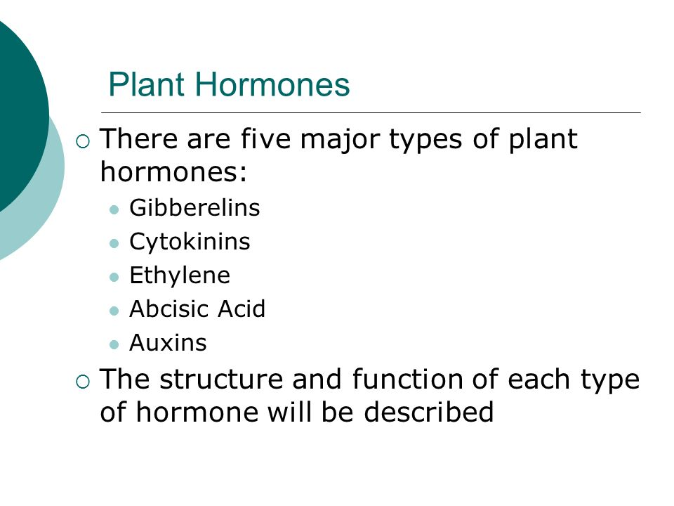 Ppt – plant hormones powerpoint presentation | free to download.