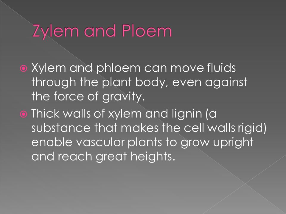 Zylem and Ploem Xylem and phloem can move fluids through the plant body, even against the force of gravity.