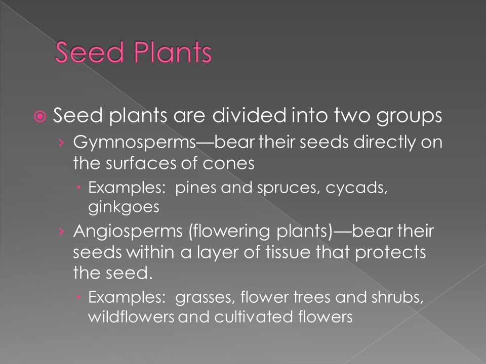 Seed Plants Seed plants are divided into two groups