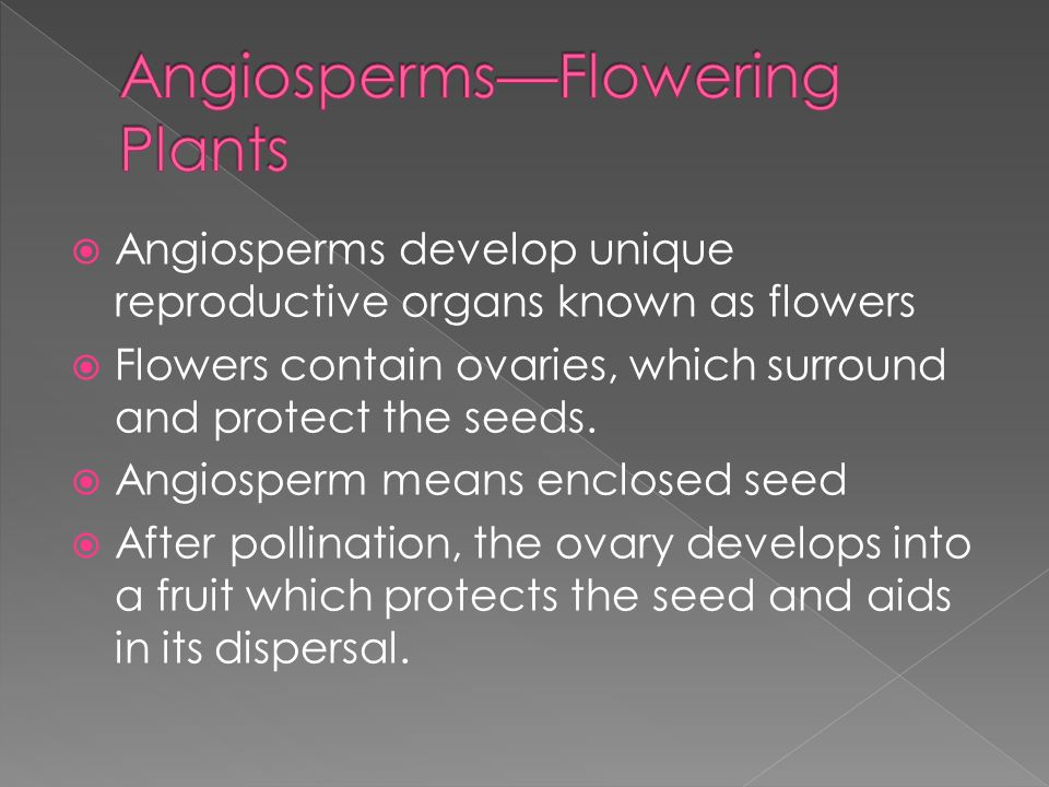 Angiosperms—Flowering Plants