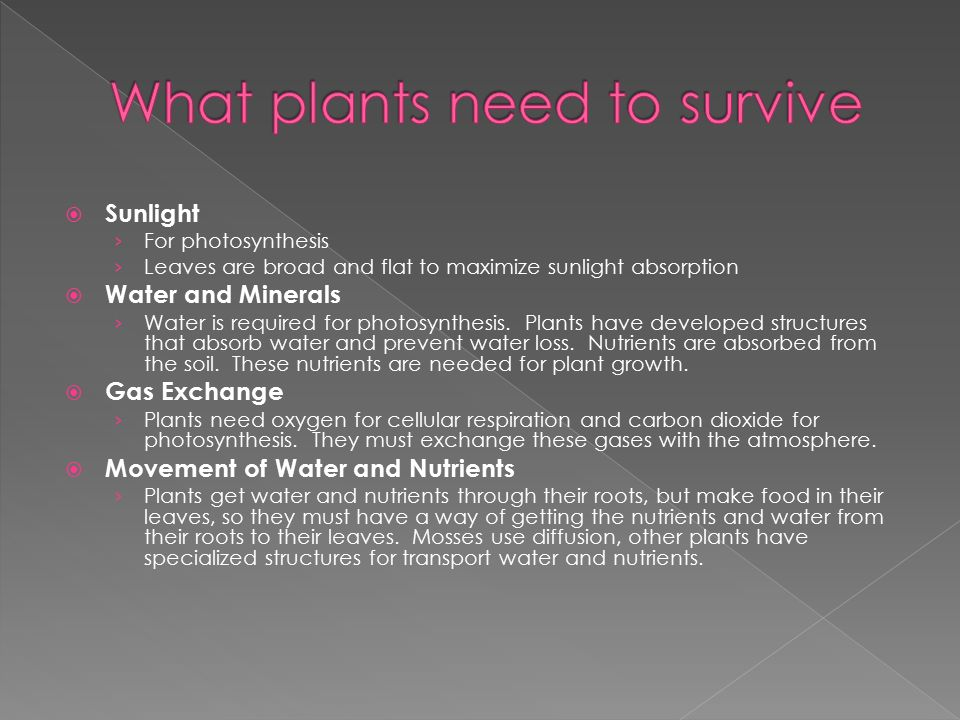 What plants need to survive