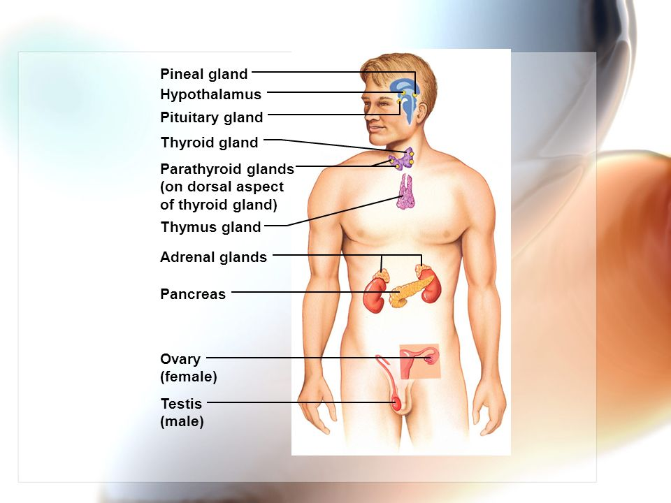 The Endocrine System Chapter Ppt Video Online Download