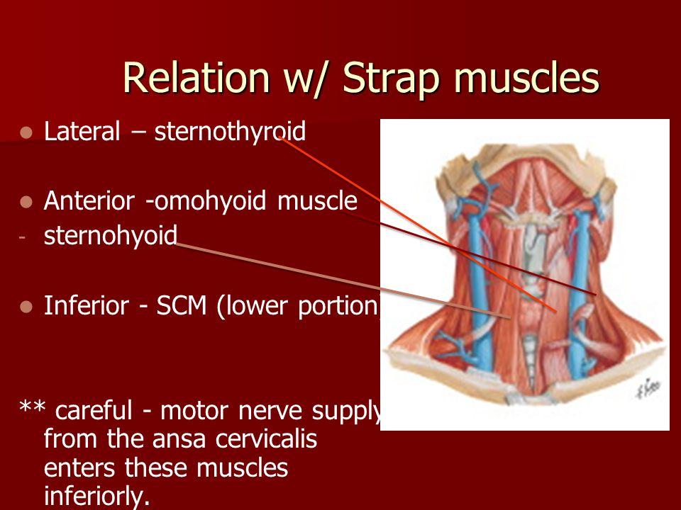 Thyroid Anatomy Ppt Download