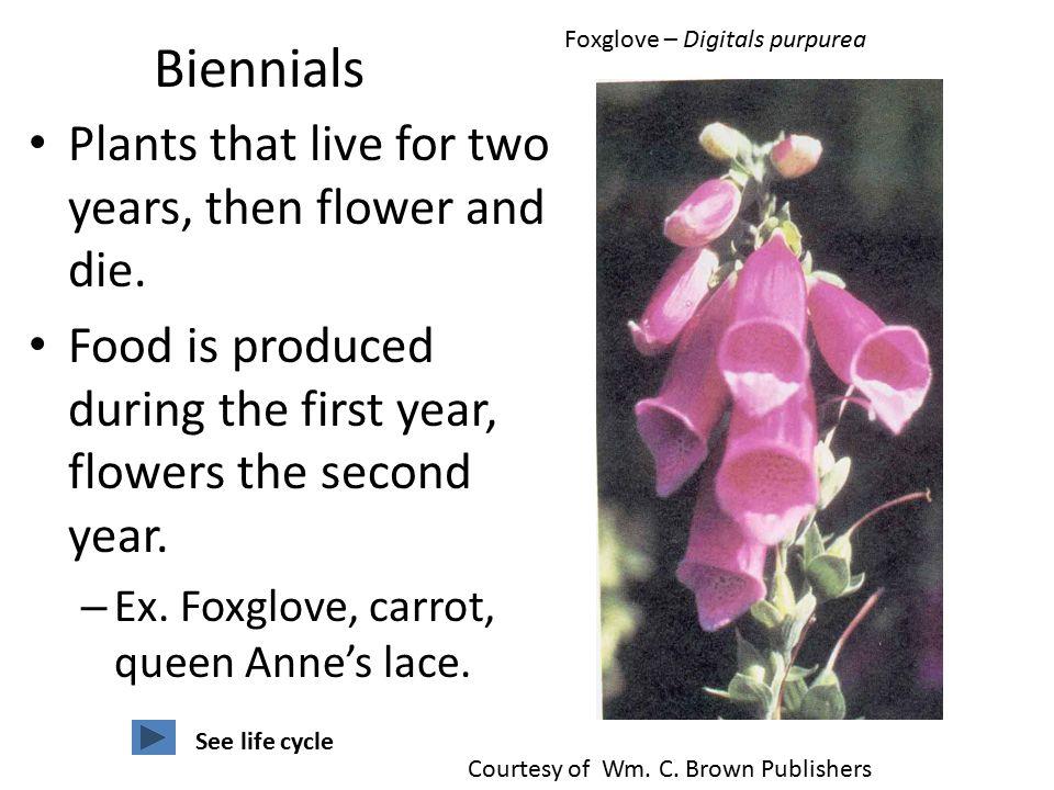 Fresh herbs annual, biennial or perennial? The gardening cook.