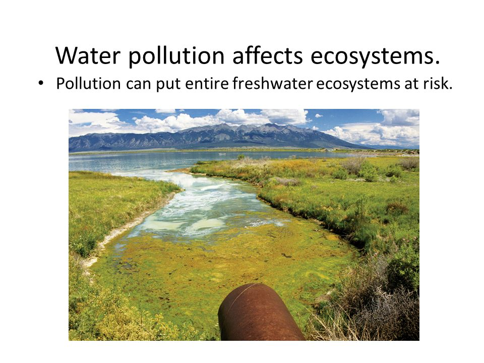 Water pollution affects ecosystems.