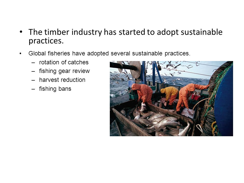 The timber industry has started to adopt sustainable practices.
