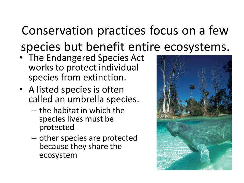 Conservation practices focus on a few species but benefit entire ecosystems.