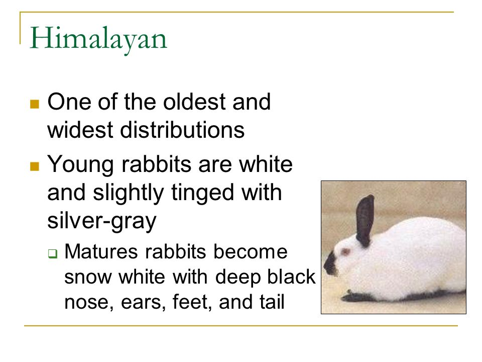 Animal Science II- Small Animal - ppt download