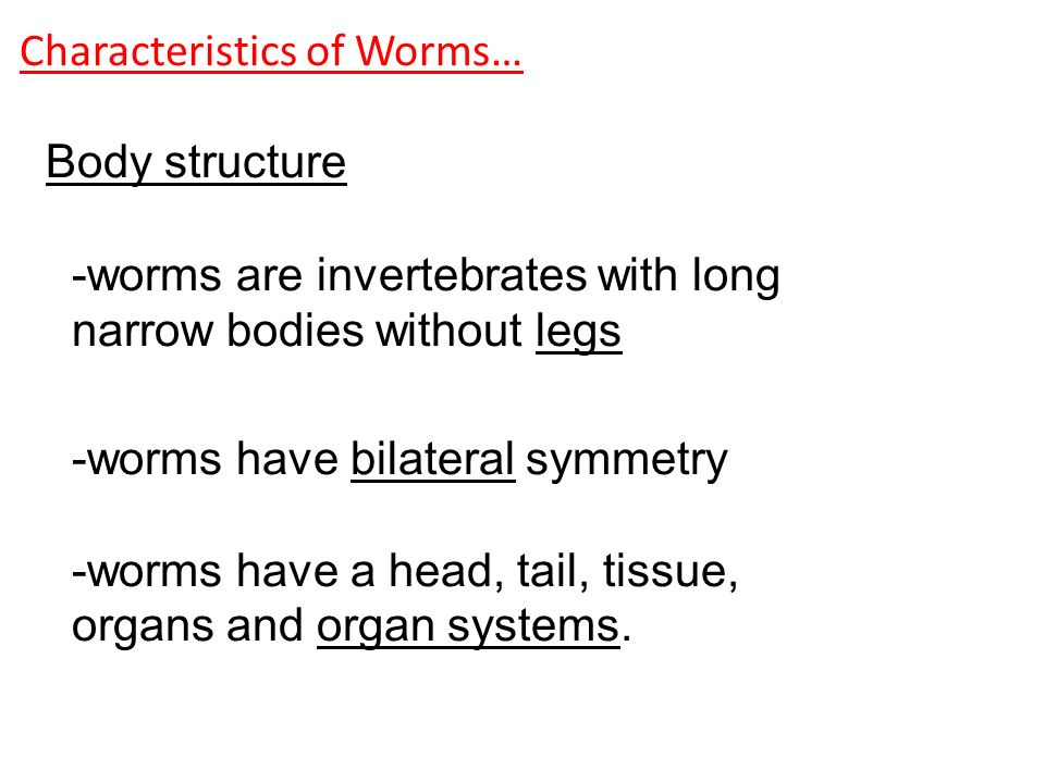 what are the three main phyla of worms