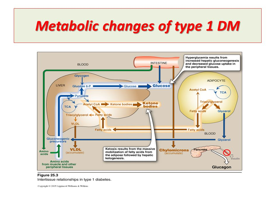 Metabolic changes of type 1 DM
