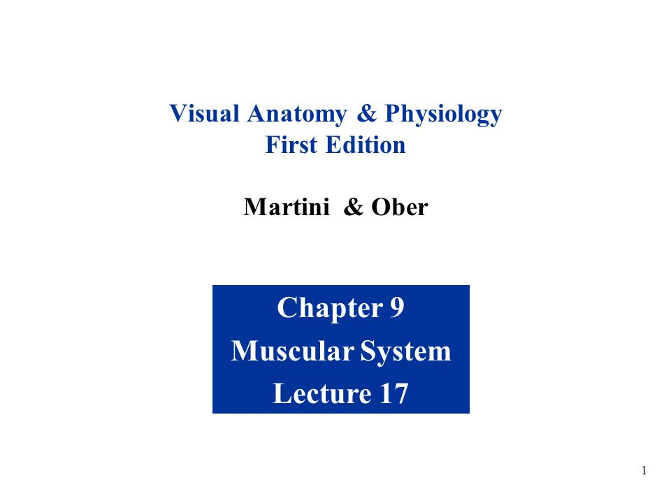 Visual Anatomy & Physiology First Edition Martini & Ober - ppt download
