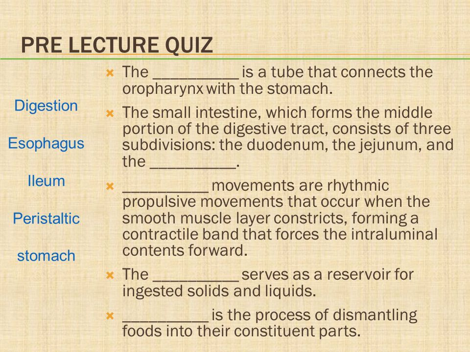 Chapter 28 Structure and Function of the Gastrointestinal