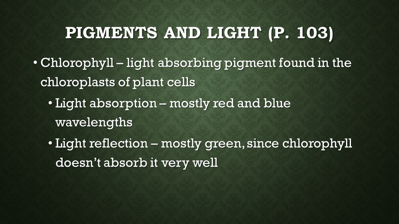 Pigments and light (p. 103) Chlorophyll – light absorbing pigment found in the chloroplasts of plant cells.