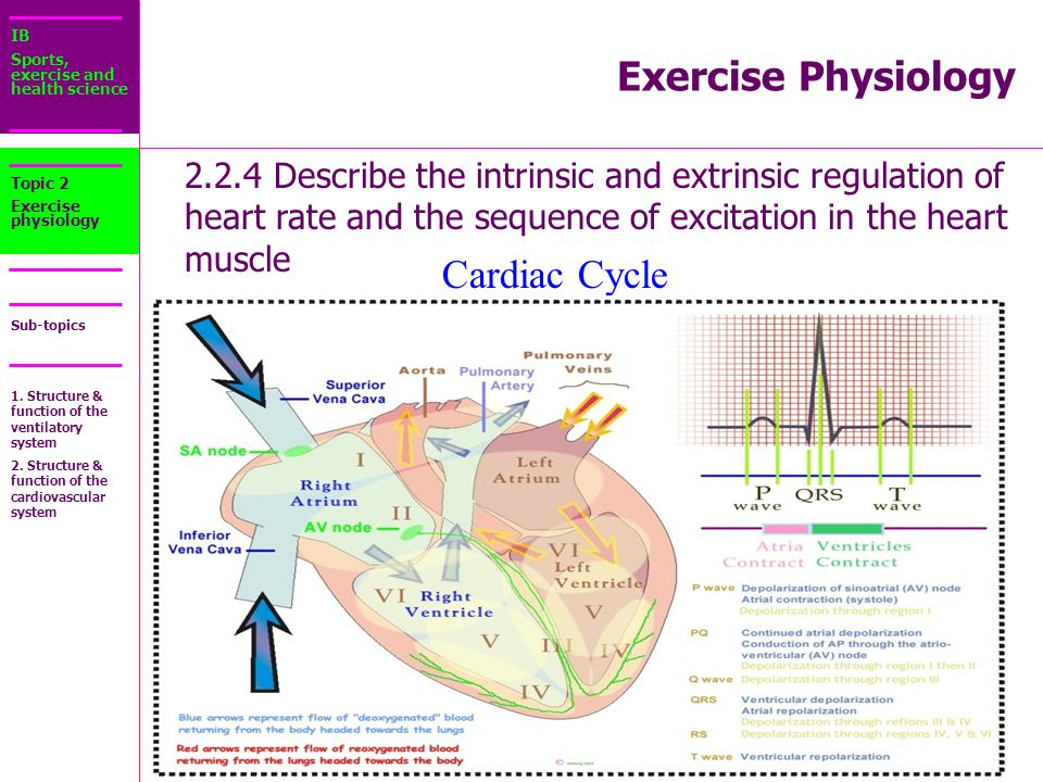 Test momentum and collisions ppt download exercise physiology cardiac cycle ccuart Image collections