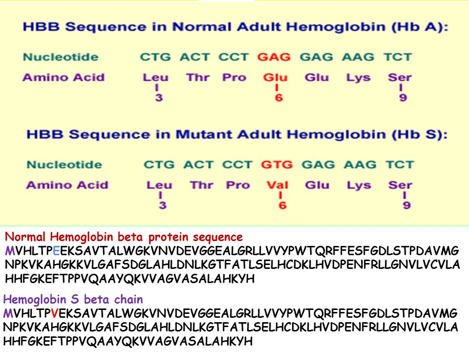 Normal Hemoglobin beta protein sequence